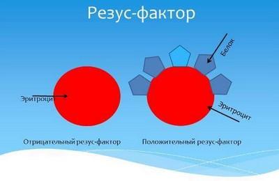 Резус-фактор – что такое группа крови и резус-фактор? Отрицательный резус фактор – особенности людей